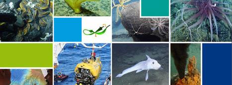 Ressources minérales marines profondes : leur exploitation détruirait irrémédiablement les habitats | Outre-Mer | Scoop.it