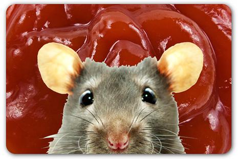 Rodent fur detected in Heinz Ketchup | Frankenfood and PR | Scoop.it
