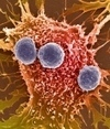 Scientists print self-assembling 'living tissue' | SJC Science | Scoop.it