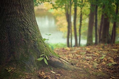 Menace sur le financement du développement forestier dans les Vosges | Epinal infos | La SELECTION - Revue de presse du CAUE des Vosges | Scoop.it