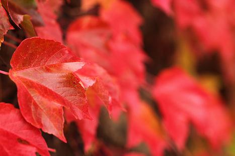 Les sites du mois d'octobre | A lire, à écouter, à visionner.... | Scoop.it