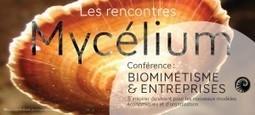 Biomimicry Europa, comité français | | Rencontre Mycélium, Biomimétisme & Entreprises | Biomimétisme & Biomimicry | Scoop.it