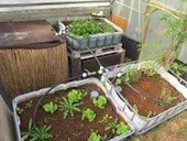 Aquaponie : des poissons (et des légumes) dans mon jardin | Inspire Institut, réconcilier développement économique et biosphère. | Avoir du savoir ville durable | Scoop.it