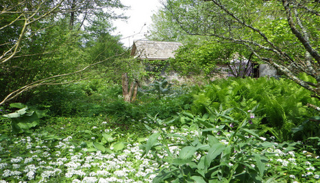 #COP21 – A Strasbourg une forêt-jardin sort de terre - National Geographic | ville et jardin | Scoop.it