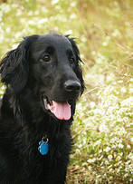Healthy, Homemade Dog Food – Transform Your Dog's Diet | Health Care For Dogs | Veterinarian | Scoop.it