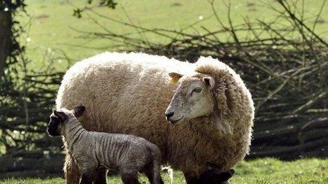 Les bienfaits du pastoralisme en Dordogne - France 3 Aquitaine | Evénements patrimoine | Scoop.it