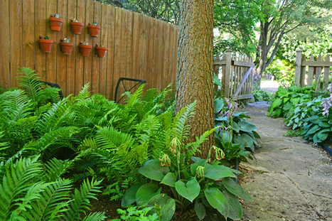 2 Great Perennials To Plant In A Shady Side Yard Garden | Everyday Gardeners | Annie Haven | Haven Brand | Scoop.it