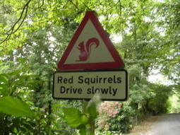 Protect Loch Ness Red Squirrel from Extinction | GarryRogers Biosphere News | Scoop.it