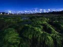 La Bretagne signe le premier arrêté préfectoral pour la protection des eaux contre la pollution par les nitrates | Toxique, soyons vigilant ! | Scoop.it