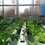 Hydroponic Rooftop Farm In Sunset Park Will Provide 5K New Yorkers Veggies | Permaculture, Philosophy & a sustainable future | Scoop.it