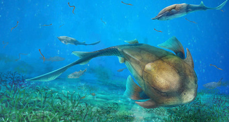 Ancient armored fish revises early history of jaws | Oceans and Wildlife | Scoop.it