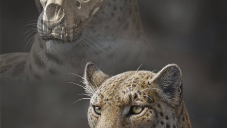 Clues to the Origins of Big Cats - New York Times | Wildlife management | Scoop.it