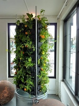 Plants On Walls Vertical Gardens: Aquaponic Vertical Vegetable Garden | Vertical Farm - Food Factory | Scoop.it