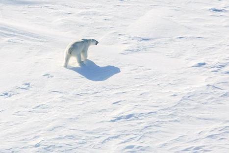 Cambio climático y Rusia dominan reunión de países árticos [30220] | Lo que pasa en el Mundo | Agua | Scoop.it