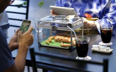 Un bar à serpents suscite la curiosité à Tokyo | Vins & gourmandises | Scoop.it