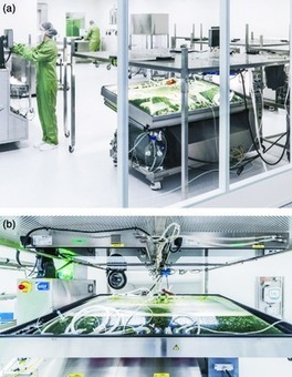 Moss-made pharmaceuticals: from bench to bedside - Reski - 2015 - Plant Biotechnology Journal - Wiley Online Library | plant cell genetics | Scoop.it