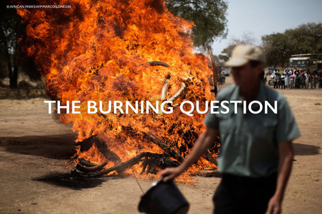 The Burning Question - Africa Geographic Magazine | GarryRogers NatCon News | Scoop.it