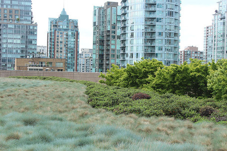 Vancouver Public Library Discusses Urban Green Space and eBooks | Good E-Reader - eBooks, Publishing and Comic News | Canadian Library Smiles | Scoop.it