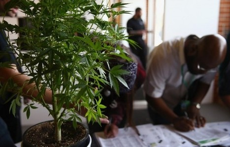 16 Jobs Being Created By the Marijuana Industry | TheVegas420 | Scoop.it