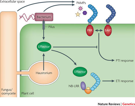 Nature Reviews Genetics:  Plant immunity: towards an integrated view of plant–pathogen interactions | plant-microbe interactions | Scoop.it