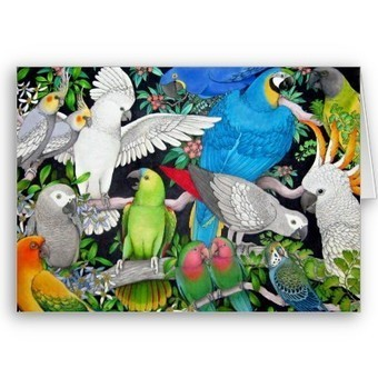 Parrots of the World Card from Zazzle.com   Artistic Greeting Cards   Scoop.it
