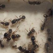 Ant Colony Sets Up Home On The Space Station / La colonie de fourmis installe son nid sur la station spatiale | EntomoNews | Scoop.it
