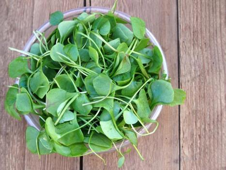 Watercress extract could protect smokers against cancer | Preventive Medicine | Scoop.it