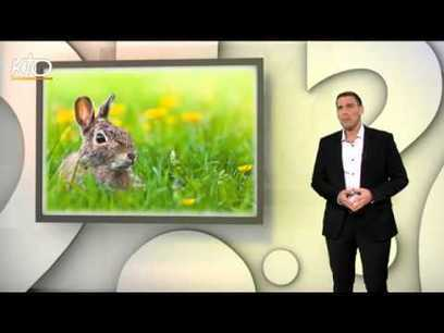 Pourquoi mange-t-on des oeufs, des cloches et des lapins en chocolat à Pâques ? - YouTube | FLE | Scoop.it