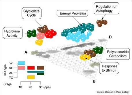 The big five of the monocot genomes | MycorWeb Plant-Microbe Interactions | Scoop.it