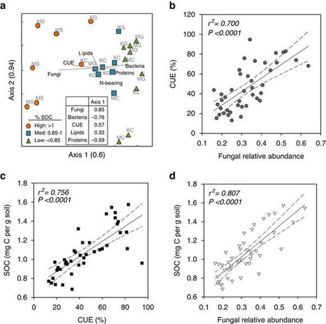 Direct evidence for microbial-derived soil organic matter formation and its ecophysiological controls | Microbiome and plant immunity | Scoop.it