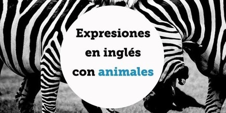 Expresiones en inglés con animales | FOTOTECA LEARNENGLISH | Scoop.it