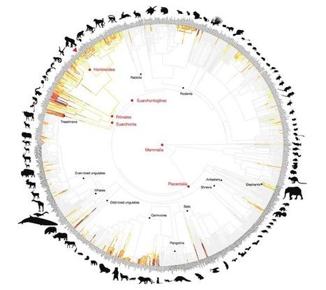 Les suricates, plus grands meurtriers de la nature | Biodiversité | Scoop.it