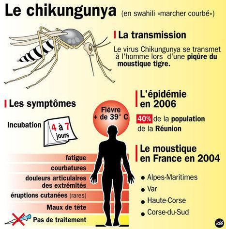 Corse : suspicion d'un cas de chikungunya | EntomoNews | Scoop.it