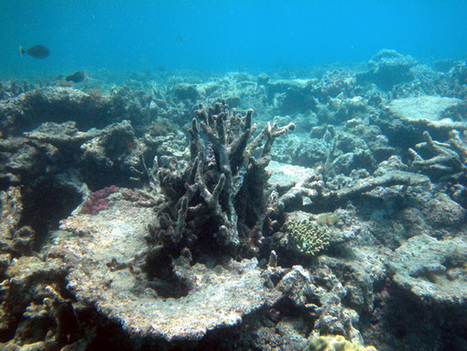 Researchers Find Historic Ocean #Acidification Levels: 'The Next Mass #Extinction May Have Already Begun' #FF #climate | Messenger for mother Earth | Scoop.it