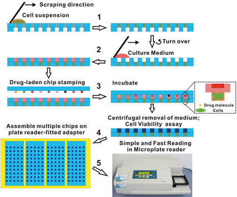 High-throughput chip for drug screening in 3D | Chemistry World | Drug Discovery | Scoop.it