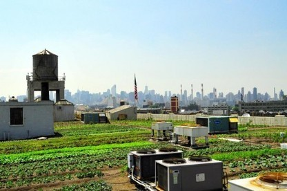 Des fermes urbaines sur les toits de New-York | Macrophone | Scoop.it