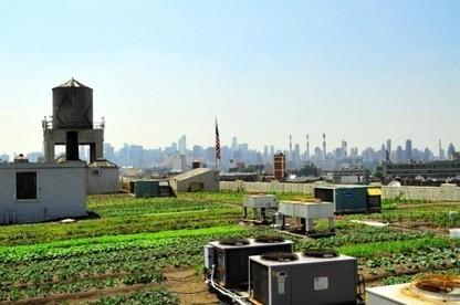 Des fermes urbaines sur les toits de New-York | Sustainable imagination | Scoop.it