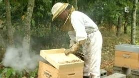 Mauvaise météo pour les apiculteurs - France 3   Abeilles, intoxications et informations   Scoop.it