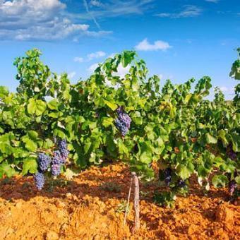 Oenotourisme en Espagne : 6 projets distingués | Oenotourisme | Scoop.it