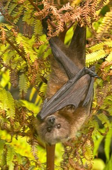 Bats are important to your garden | Community Support Agriculture | Scoop.it