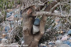 Las Crecidas del Yeguas | Blogs de naturaleza | Scoop.it