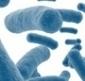 CANCER COLORECTAL: Une question de microbiome intestinal?   En savoir plus sur le cancer colorectal avec France Côlon   Scoop.it