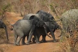 Destruction des stocks d'ivoire illicite saisi en France | Chronique d'un pays où il ne se passe rien... ou presque ! | Scoop.it