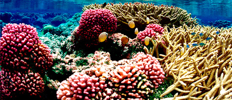 Coral Reefs Face Point of No Return | EcoWatch | Scoop.it