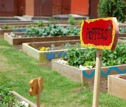 Weavers Way Co-op pleased urban farming provision removed from City Council bill  — NewsWorks | Vertical Farm - Food Factory | Scoop.it