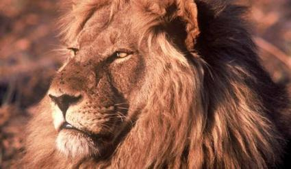 Tourism money new king of the jungle | IOL | Wildlife News | Scoop.it