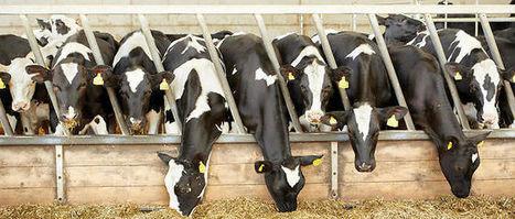 """Enquête sur les """"cartels du lait"""" - Le Point   Le Fil @gricole   Scoop.it"""