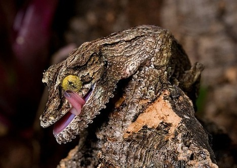 25 Incredible Camouflaged Animals | Interesting and Fascinating | Scoop.it