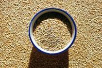 La quinua de los Andes se cultivará en África y Asia para combatir el hambre | Quinoa | Scoop.it