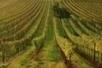 Sur les routes des vins du monde | Carpediem, art de vivre et plaisir des sens | Scoop.it